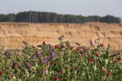 Brown węgiel otwarty - lany górniczy hambach Germany Zdjęcie Stock