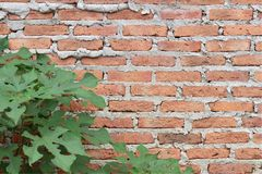 Brown walls Royalty Free Stock Photos