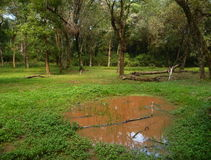 Brown water pond in a deep jungle Stock Photos