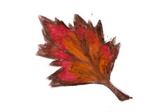 Brown watercolor abstract handmade leaf Royalty Free Stock Image