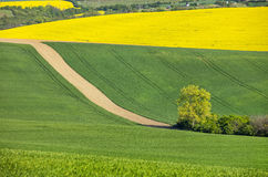 Brown way to tree in spring fields Royalty Free Stock Image