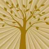 Brown wektorowa ilustracja drzewna sylwetka na abstrakcjonistycznym tle Zdjęcia Royalty Free