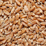 Brown wheat grains Royalty Free Stock Image