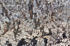 Brown and Whhite Textured Granite Stock Images