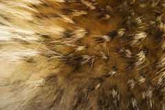 Brown and white animal fell texture Royalty Free Stock Images