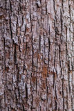 Brown and White Bark Of Tree Stock Photography