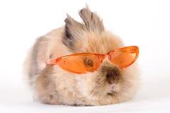 Brown-white bunny Stock Photos