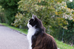 Brown white cat outdoor close up picture at daytime Royalty Free Stock Images