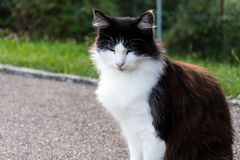 Brown white cat outdoor close up picture at daytime Royalty Free Stock Photos