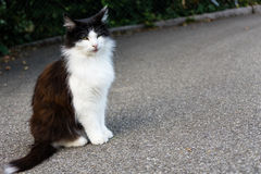 Brown white cat outdoor close up picture at daytime Stock Photo