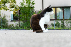 Brown white cat outdoor close up picture at daytime Stock Images