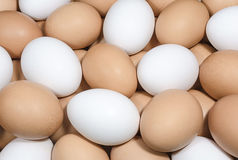Brown and white chicken eggs Stock Images