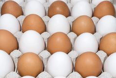 Brown and white chicken eggs in a tray Stock Image