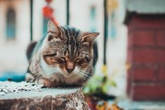 Brown and white cute cat sleeping outdoors stock images