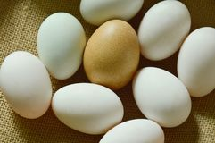 Brown and white egg arranging on sackcloth. Background Stock Photo