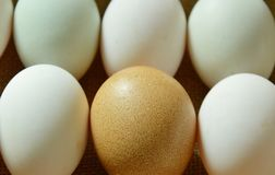 Brown and white egg arranging on sackcloth. Background Royalty Free Stock Photography