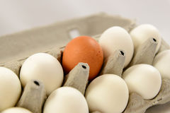 Brown and white eggs. In a carton Stock Images
