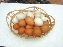 Brown and white eggs Stock Photography