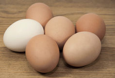 Brown and White Eggs on Grained Wood Royalty Free Stock Image