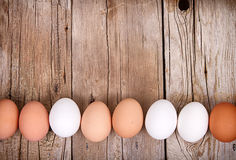 Brown and white eggs lined up Royalty Free Stock Images