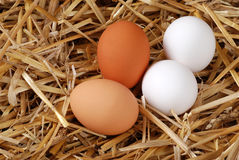 Brown and white eggs in straw Royalty Free Stock Photos