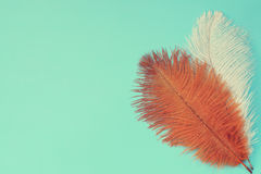 Brown and white feathers Stock Photography