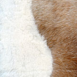 Brown and white fur texture Stock Image