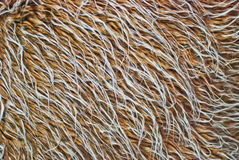Brown and white fur texture closeup Royalty Free Stock Photo