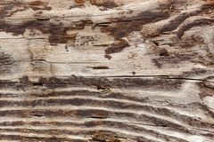Brown and white grain of wood log. Weathered by ocean waves royalty free stock photos