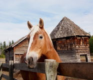 Brown And White Horse Alongside Wooden Fence Royalty Free Stock Photo