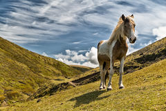 Brown and white horse Stock Images