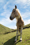 Brown and white horse Royalty Free Stock Photos