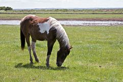 Brown and white horse in a field stock photo