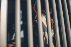 Brown and White Horse Inside the Cage Stock Photography