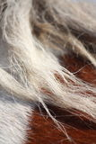 Brown and white horse mane close up Royalty Free Stock Images