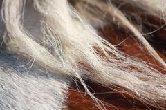 Brown and white horse mane close up Stock Photo