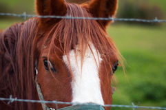 Brown and white horse portrait Royalty Free Stock Photos