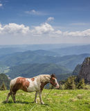 Brown and white horse at the top of Ceahlau mountain range Royalty Free Stock Photo