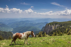 Brown and white horse at the top of Ceahlau mountain range Royalty Free Stock Photography