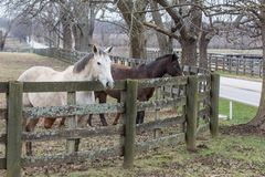 Brown and white horses in a paddock stock photos