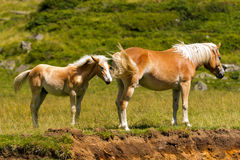 Brown and White Mare with Foal Stock Photos