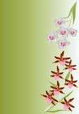 Brown and white orchid branches Stock Image