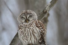 Owl in the forest stock image
