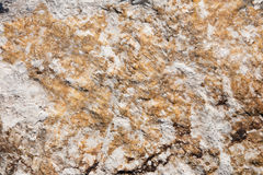 Brown and white rock texture Stock Images