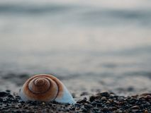 Brown and White Shell Near of Seashore Stock Photos