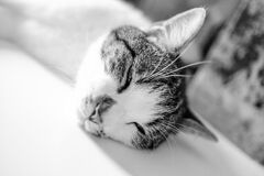 Brown White Short Fur Cat Lying on White Textile Stock Image