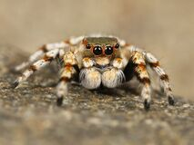 Brown and White Spider Stock Photography