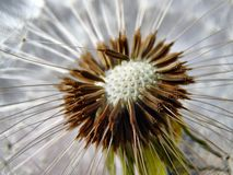 Brown and White Spike Flower Stock Photos