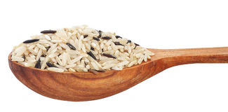 Brown and wild rice mix in wooden spoon Royalty Free Stock Photo