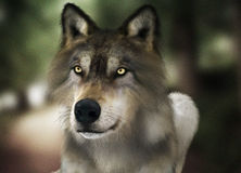 Brown wild wolf with yellow eyes with blurred depth of field nature background. Photo realistic 3d rendering Stock Photos